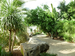 Inside the Temperate House, Jephson Gardens, Leamington Spa
